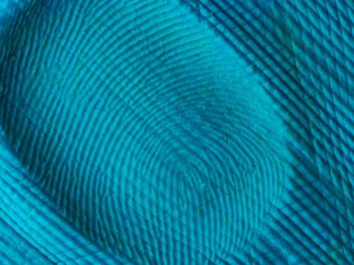 Article | Current Challenges & Opportunities In The Field Of Biometrics