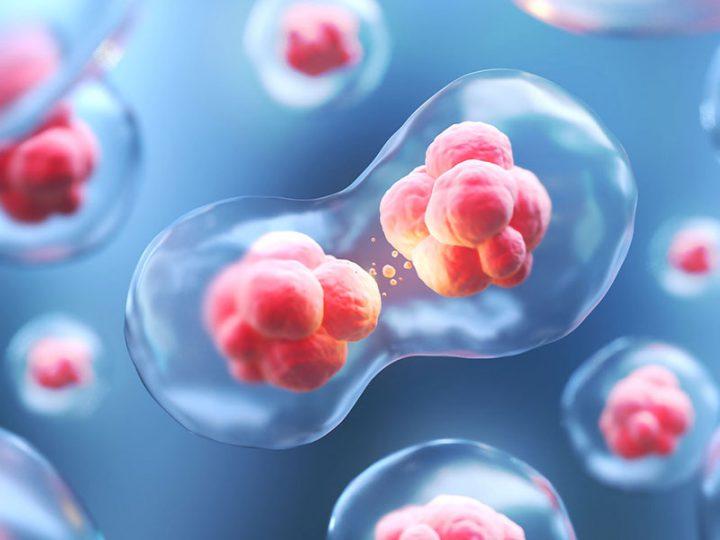 Article | KOLs: Stem Cell Transplantation (SCT) – USA